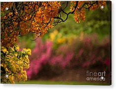 Spring Canopy Acrylic Print by Mike Reid