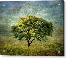 Spring Canvas Acrylic Print