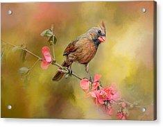 Spring Cardinal 1 Acrylic Print by Jai Johnson