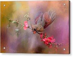 Spring Cardinal 2 Acrylic Print by Jai Johnson