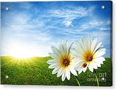 Spring Acrylic Print by Carlos Caetano