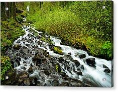 Spring Cascades Acrylic Print by Mike  Dawson