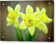 Spring Chorus Acrylic Print by Rebecca Cozart