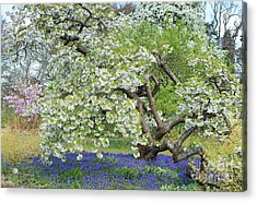 Acrylic Print featuring the photograph Spring Color by Tim Gainey