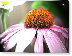 Spring Colors Acrylic Print by Becca Brann