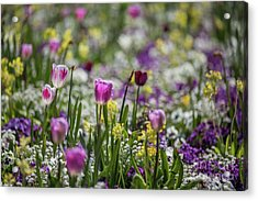 Spring Colors Acrylic Print by Eva Lechner