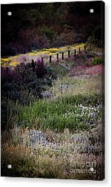 Acrylic Print featuring the photograph Spring Colors by Kelly Wade