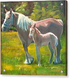Spring Colt Acrylic Print by John Reynolds