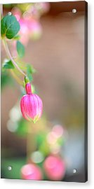 Acrylic Print featuring the photograph Spring Comes To South Carolina by Corinne Rhode