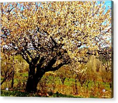 Acrylic Print featuring the photograph Spring Comes To The Old Cherry El Valle New Mexico by Anastasia Savage Ealy