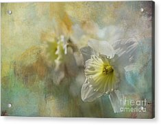 Acrylic Print featuring the photograph Spring Daffodils by Eva Lechner