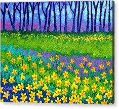 Spring Daffodils Acrylic Print by John  Nolan