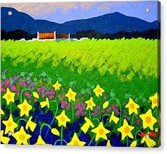 Spring Daffs Ireland Acrylic Print by John  Nolan