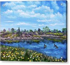 Spring Daisies At Los Gatos Lake Acrylic Print