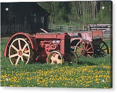 Spring Dandelions Acrylic Print