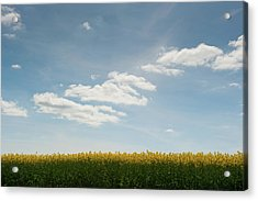 Spring Day Clouds Acrylic Print