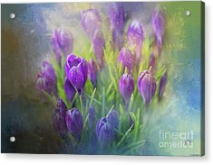 Acrylic Print featuring the photograph Spring Delight by Eva Lechner