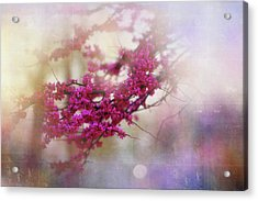 Acrylic Print featuring the photograph Spring Dreams II by Toni Hopper