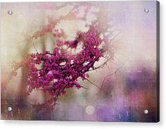 Acrylic Print featuring the photograph Spring Dreams IIi by Toni Hopper