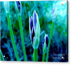 Acrylic Print featuring the photograph Spring Erupting Early by Marsha Heiken