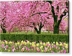 Acrylic Print featuring the photograph Spring Extravaganza by Jessica Jenney