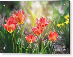 Spring Favorites Acrylic Print