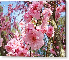Spring Floral Art Prints Pink Tree Blossoms Acrylic Print by Baslee Troutman