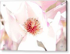 Spring Flower Blossoms Acrylic Print