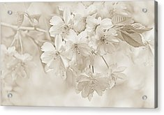 Acrylic Print featuring the photograph Spring Flower Blossoms Soft Brown by Jennie Marie Schell