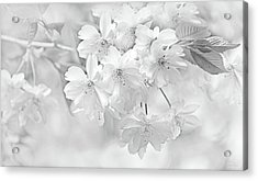 Acrylic Print featuring the photograph Spring Flower Blossoms Soft Gray by Jennie Marie Schell