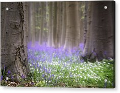 Spring Flower Fantasy Acrylic Print by Dirk Ercken