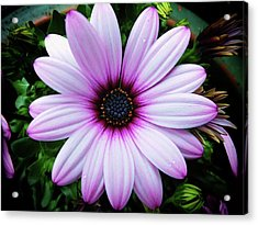 Spring Flower Acrylic Print by Karen Stahlros