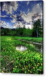 Acrylic Print featuring the photograph Spring Flowers by Bryan Carter