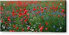 Spring Flowers Acrylic Print by Ellen Heaverlo