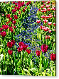 Spring Flowers Impression Acrylic Print by Olivier Le Queinec