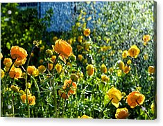 Spring Flowers In The Rain Acrylic Print by Tamara Sushko