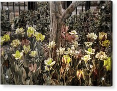 Acrylic Print featuring the photograph Spring Flowers by Joann Vitali