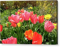 Spring Flowers Acrylic Print by Mark Severn
