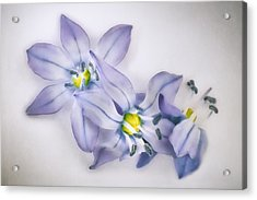 Spring Flowers On White Acrylic Print by Scott Norris