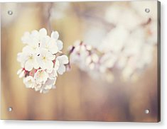 Spring Flowers Acrylic Print by Rebecca Robinson