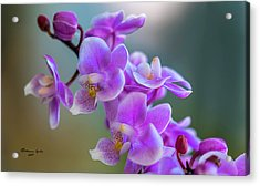 Acrylic Print featuring the photograph Spring For You by Marvin Spates