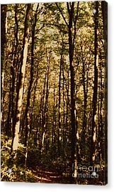 Acrylic Print featuring the photograph Spring Forest by Jean Bernard Roussilhe
