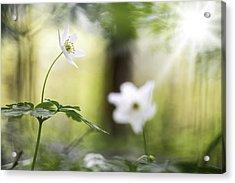 Spring Forest Wildflowers Fairy Tale Acrylic Print by Dirk Ercken