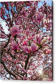 Spring Fractals Acrylic Print