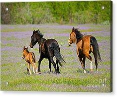 Spring Gallop Acrylic Print