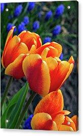 Spring Garden - Act One 3 Acrylic Print by Steve Harrington
