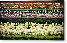 Acrylic Print featuring the photograph Spring Garden - Colorful Tulips by Frank Tschakert