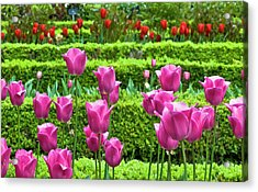 Acrylic Print featuring the photograph Spring Garden - Pink Tulips by Frank Tschakert