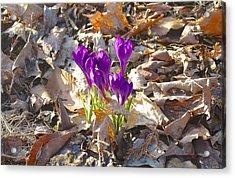 Spring Gathering Acrylic Print