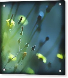 Acrylic Print featuring the photograph Spring Grass by Yulia Kazansky